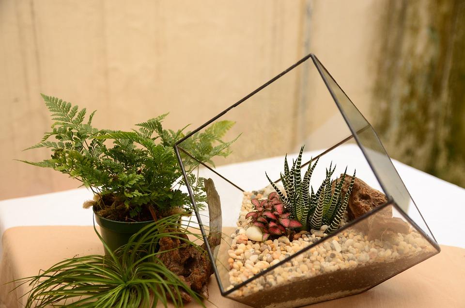 Quelles sont les étapes permettant de fabriquer soi-même son terrarium